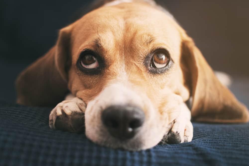 نظام جديد من الذكاء الاصطناعي يحاكي طريقة تفكير الكلاب