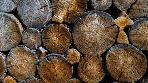 دراسة جديدة: هل أخشاب الأشجار العالقة في الأنهار عالقة فعلا؟