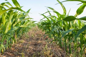 لماذا لا يمكننا الاعتماد على مَزارع امتصاص الكربون في إبطاء التغيّر المناخي؟