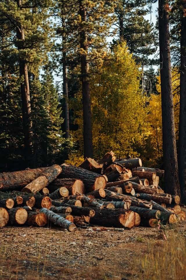 إعادة زراعة الغابات