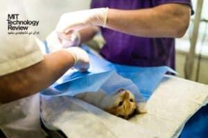 لأول مرة: اكتشاف إصابة الحيوانات الأليفة بالسلالة البريطانية من فيروس كورونا