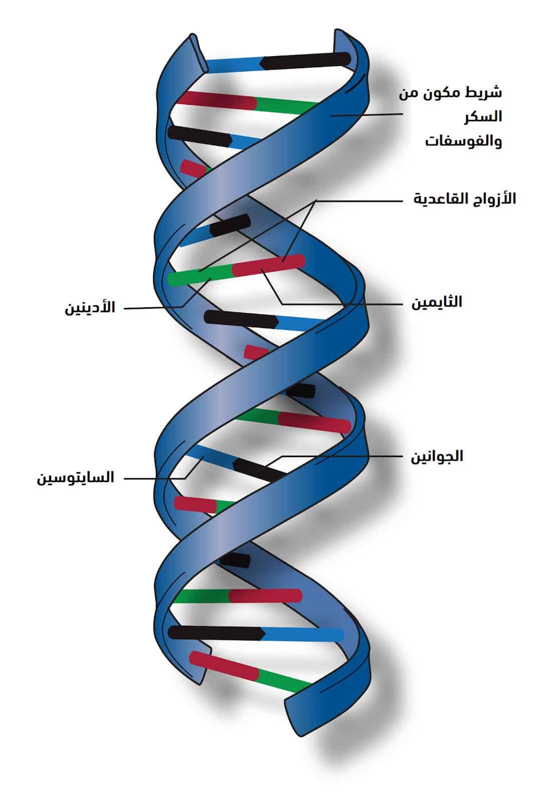 مشروع الجينوم البشري السعودي