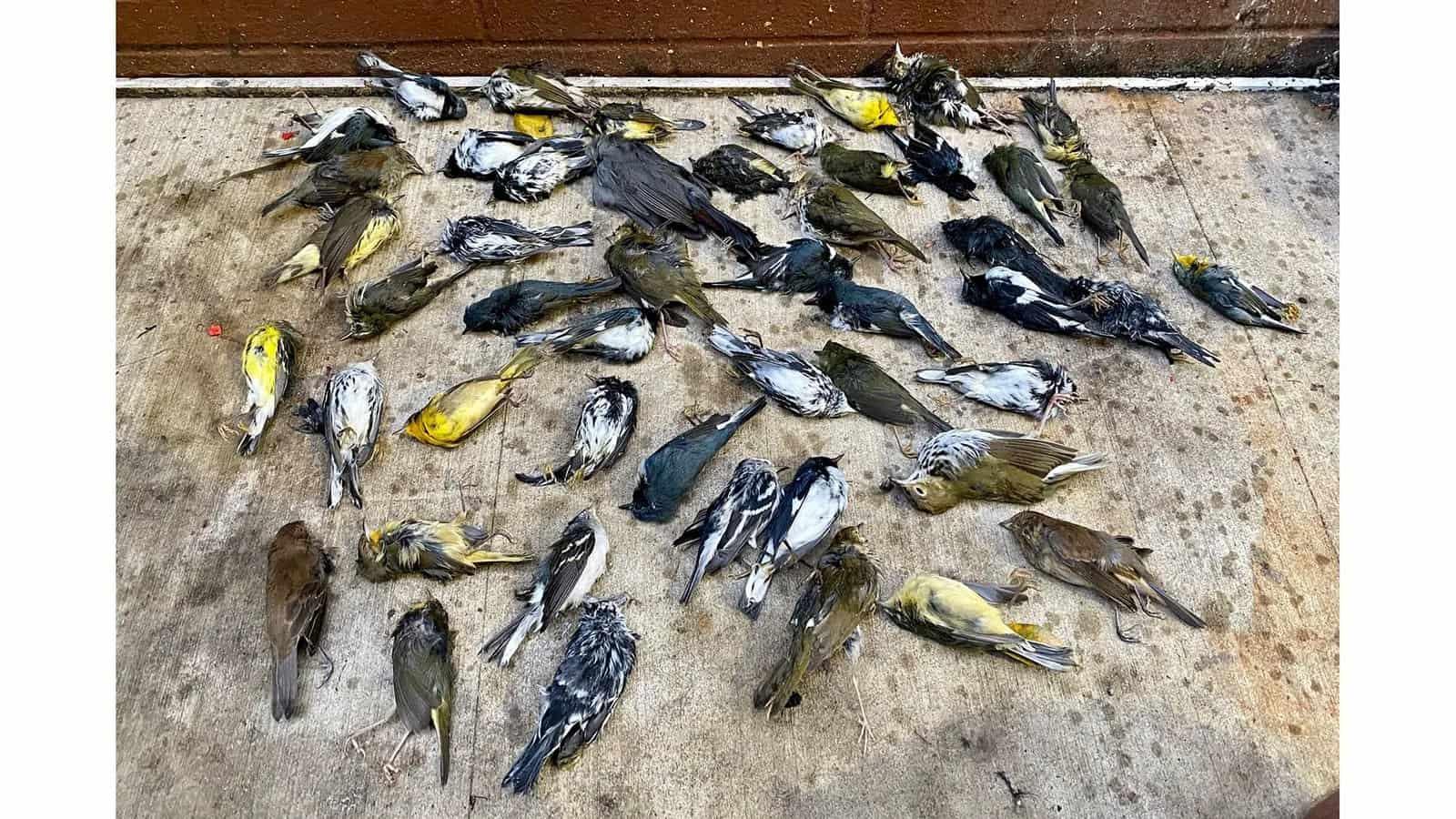 عينة من 400 طائر ميت في مدينة فيلادلفيا